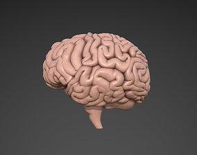 medical Brain 3D model