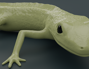 Lissotriton Montandoni Carpathian newt for 3D printing