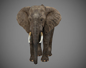 3D model rigged Elephant rig