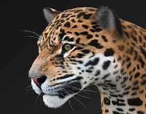 Panthera Onca - American Jaguar 3D model