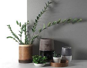 3D model Plants in Vases