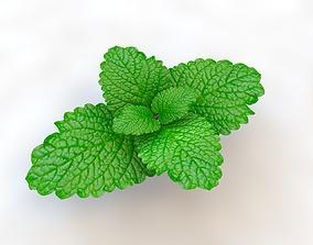 3D model Mint Leaves