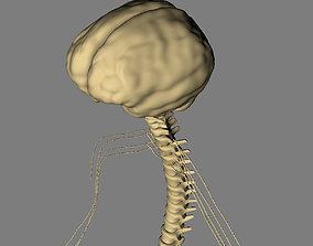 3D model Nervous System Basic MAX 2011