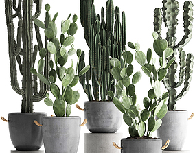3D model Collection of Exotic Cactus Plants 386