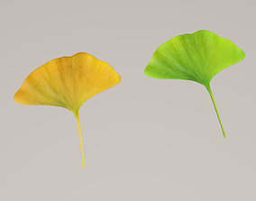 Ginkgo leaf 3D