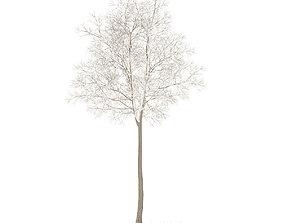 3D model American Elm with Snow 7m