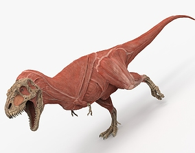 3D print model High Poly T-Rex muscle ecorche