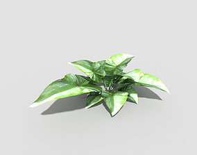 forest Low poly Plant 3D asset low-poly