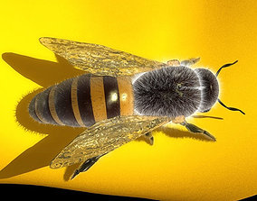Honey Bee fbx 3D