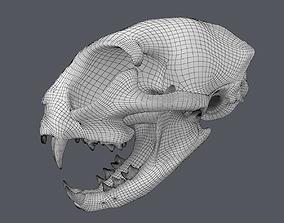 Cat Skull Base Mesh 3D model