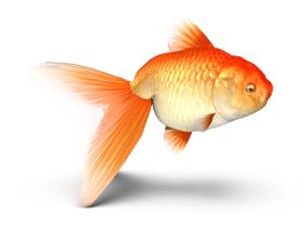 3D model Lion Head Gold Fish