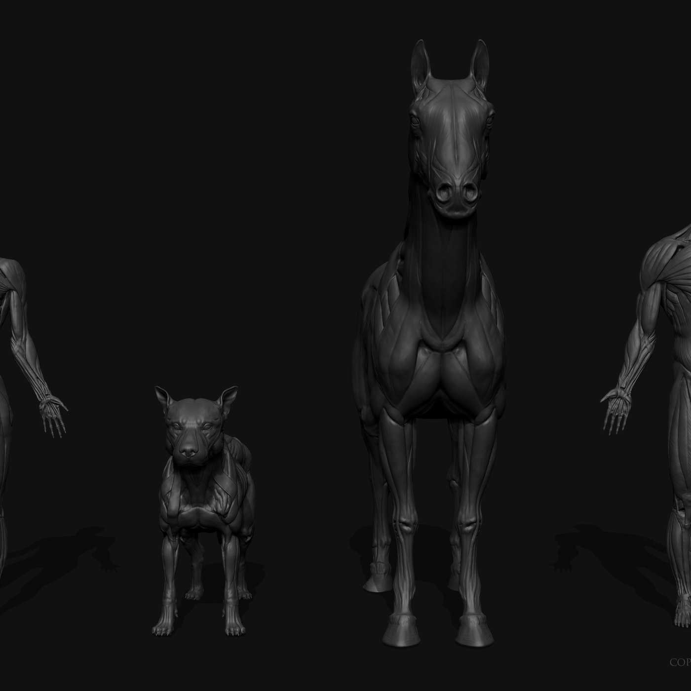 Human & Animal anatomy figures