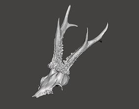 3D print model Deer antlers - horns with skull no1