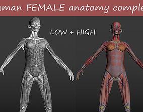 3D model game-ready Human FEMALE anatomy