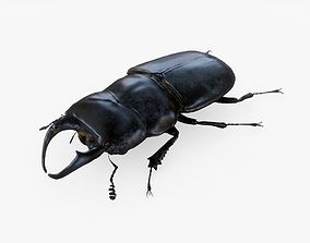 Stag Beetle 3D asset
