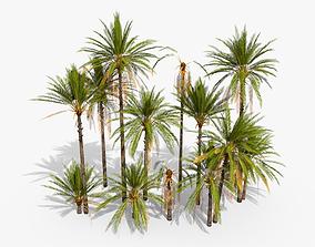 Phoenix Dactylifera Palm Tree 3D model