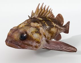 Bottom Fish 3D model