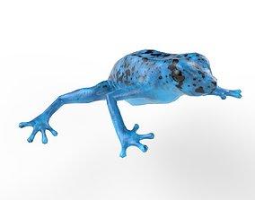 3D asset Blue poison dart frog