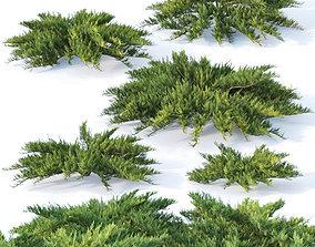 Juniperus sabina Nr1 Five bushes 3D model