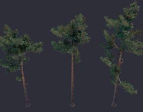 Pine LowPoly 3D model