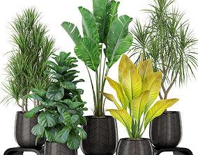 3D Plants collection 423