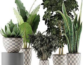 3D model Plants Collection 43