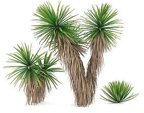 Yucca 3D model