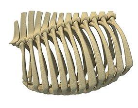 3D Bull Animal Rib Cage