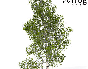 XfrogPlants Paper Birch 3D model