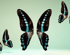 Butterfly-2 3D model