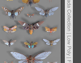 3D model 15 Cicada Insect Collection