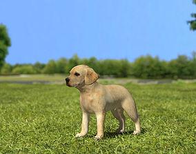 3D Labrador Retriever Puppy