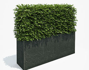 3D model Boxwood Hedge in Black Planter
