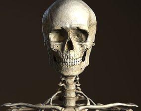 3D model Human Anatomy - Male Skeleton