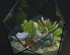 3D model Florarium decorative succulent echeveria sedum