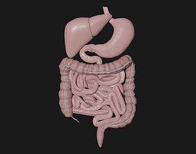 3D asset Digestive System 5