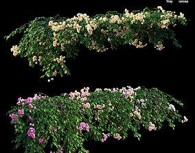 3D model Rose plant set 30