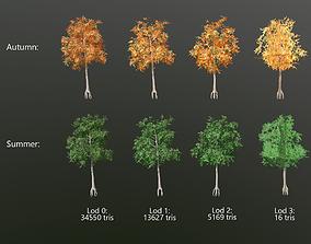 Aspen tree with lods 3D model