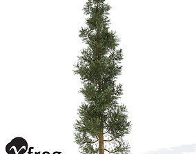 3D XfrogPlants Incense Cedar 1