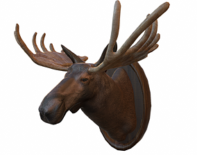 3D model Moose Head Taxidermy