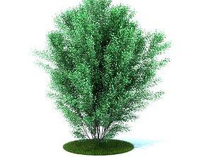 Green Garden Plant 3D