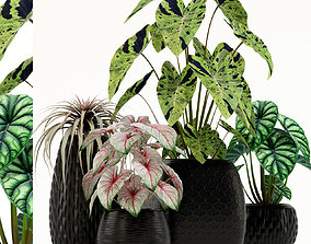 Plants collection 137 3D