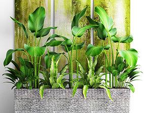 tree 3D model Plants collection pot