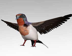 3D model animals Swallow