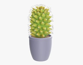 Tall cactus plant in pot 3D model