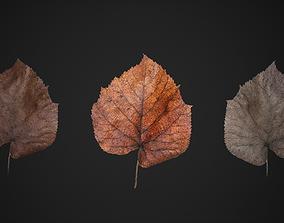 Dead Leaf 3D asset