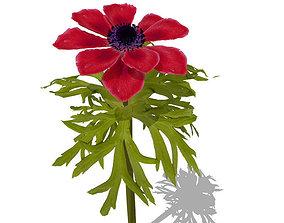 XfrogPlants Poppy Anemone 3D