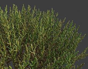 3D XfrogPlants Arthrocnemum Macrostachyum