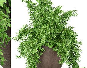 3D model Plants collection 391