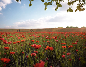 Poppy field 3D